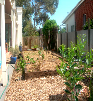 Arborcare tree garden solutions nurserymen adelaide for Garden trees adelaide